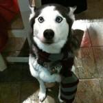 dogport-012610